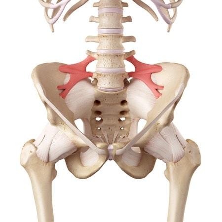 Ligaments ilio-lombaires dans entorse lombaire
