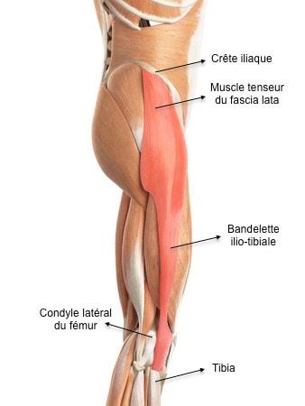 Anatomie de la bandelette ilio-tibiale